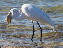 How to Eat Stuff Too Big For Your Mouth, by Ann Egret