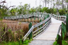 Croatan National Forest, North Carolina, USA, 27 March - 3 April, 2017